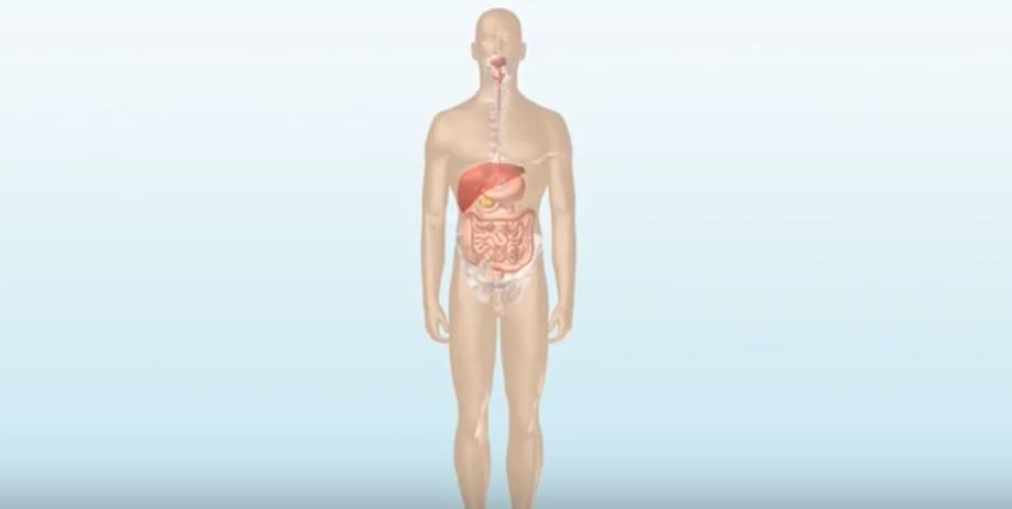 1. How the Digestive System Works